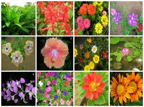 plantas-ornamentais-flores