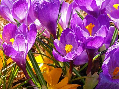 plantas que exigem-sol-direto