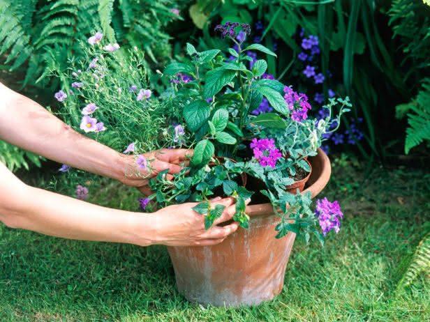 plantas-saudáveis