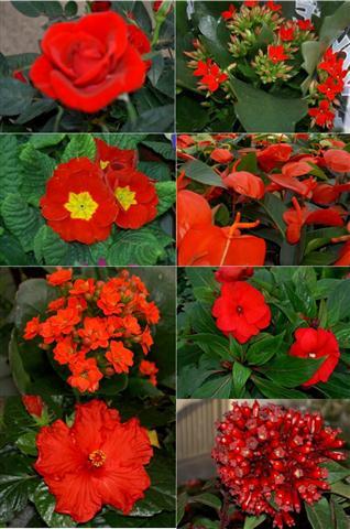 plantas vermelho (Small)