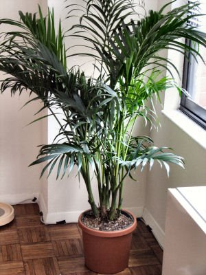 = plantas11