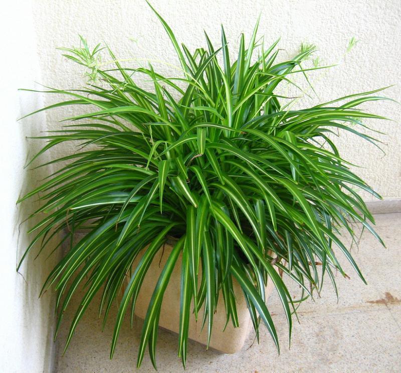 plantas_de_interior_1592