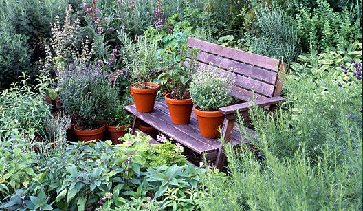 plantas_medicinais1