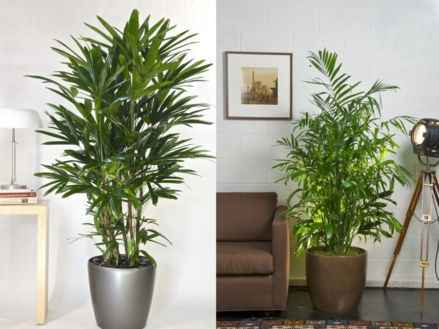 plantasdeinterior