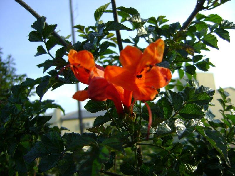 plantinhas 2