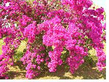 primavera_2