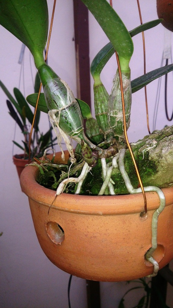 raízes2