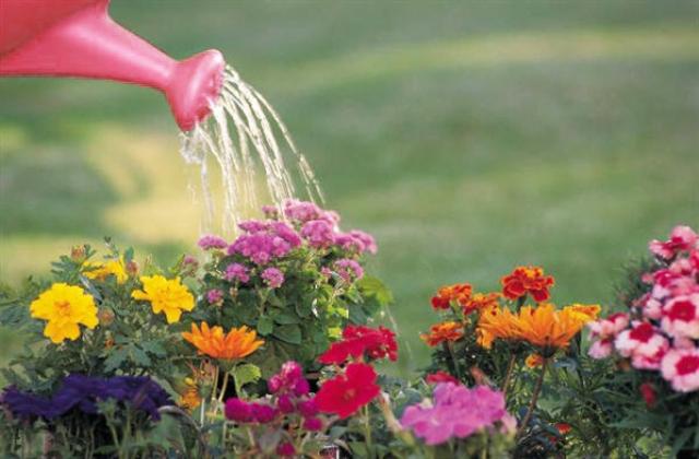 rega-plantas-flores-uemura