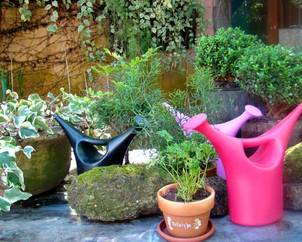 horta jardim e pomar como é melhor regar o seu jardim, horta