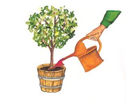 regando as plantas