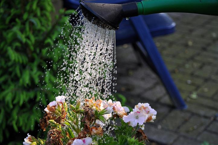 regar-flores