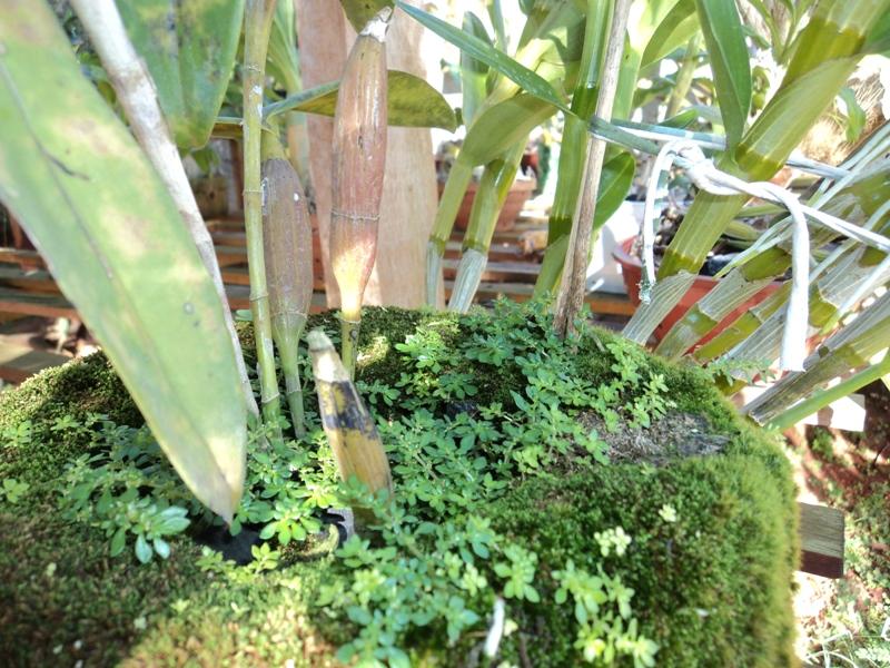 remova as plantas invasoras