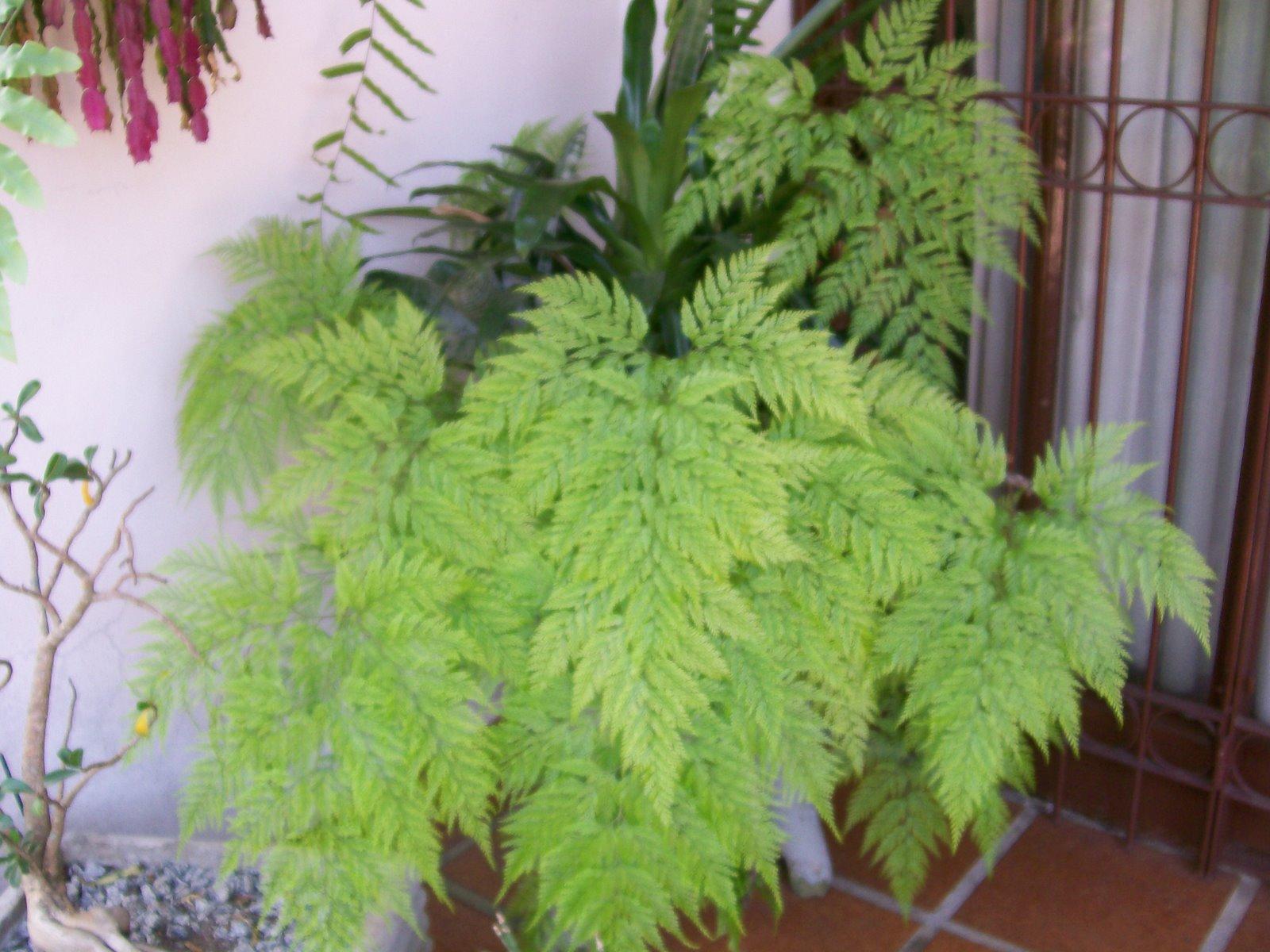 rendaportuguesa  PlantaSonya  O seu blog sobre cultivo de plantas e