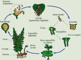 reproducao-vegetal-assexuada