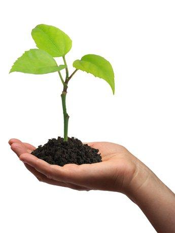 reproducir_plantas