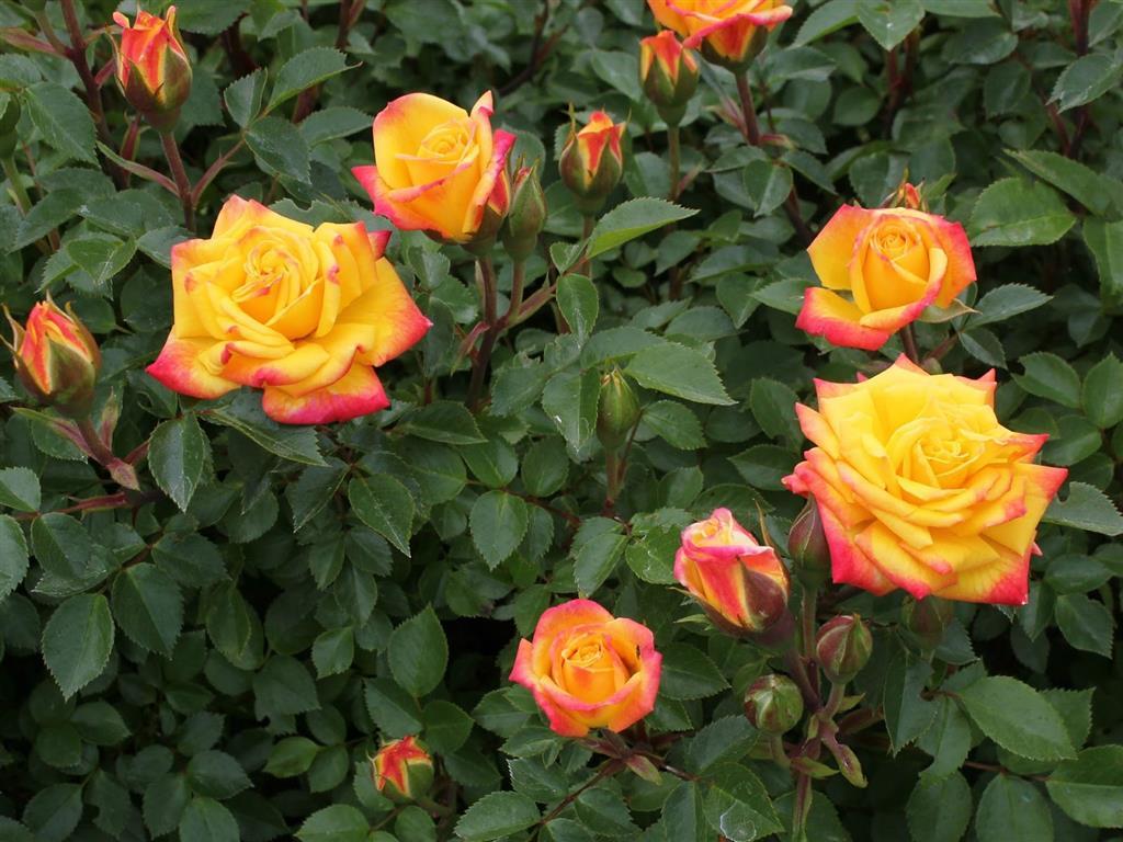 rosa cor laranja