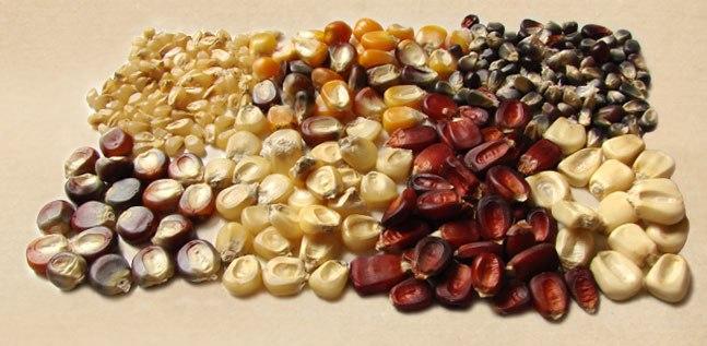 sementes-crioulas