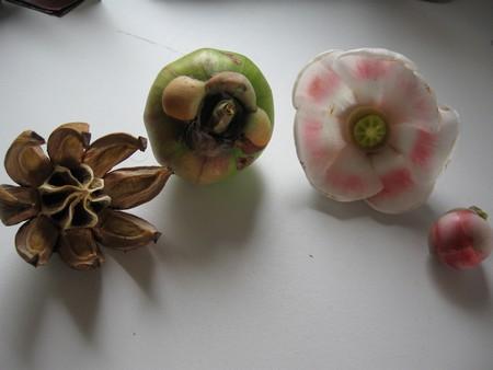 sements de flores