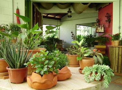 seu jardim dentro de casa