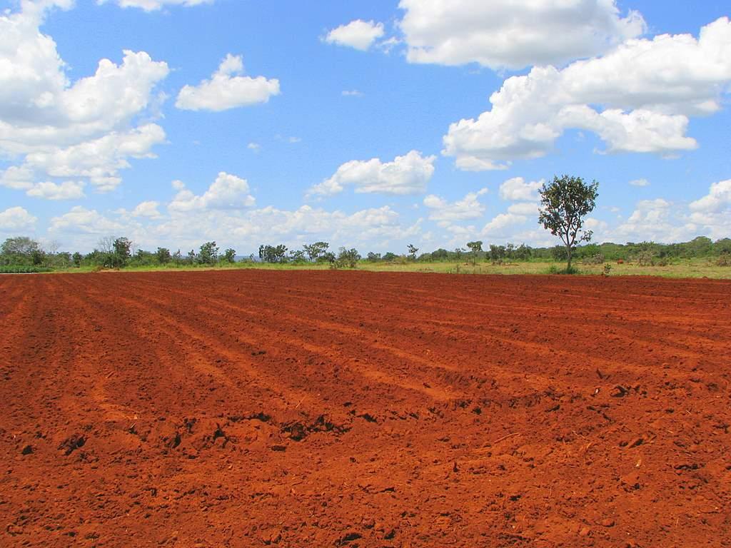 solo do cerrado brasileiro
