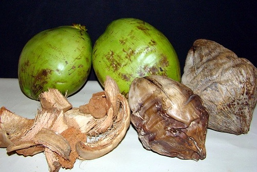 substrato de coco seco