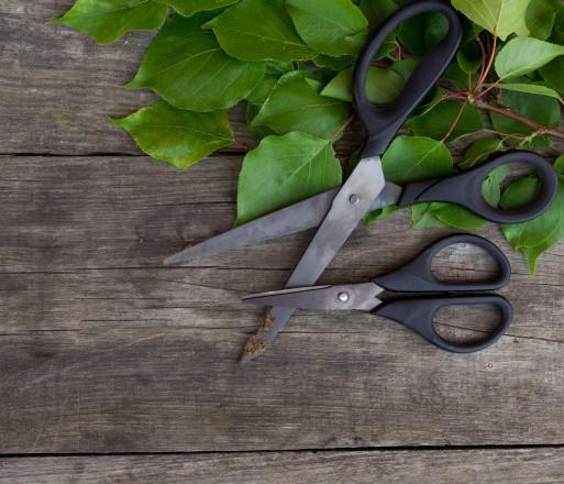 tesoura-de-jardinagem