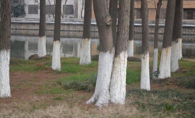 tronco-branco