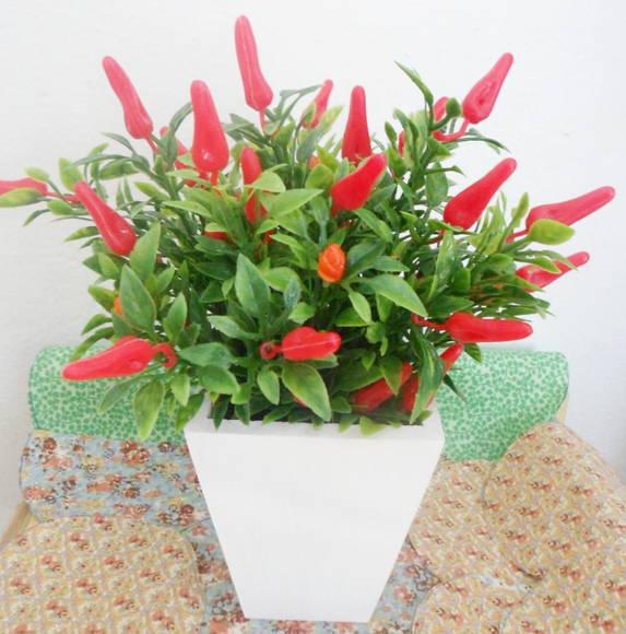 vaso-com-pimenta
