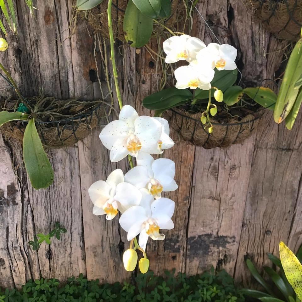 vaso-para-orquidea
