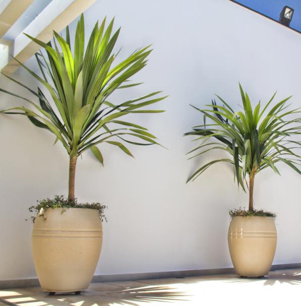 vaso_externa_planta