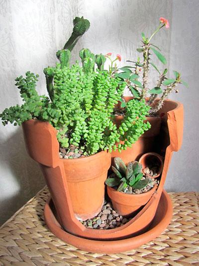 Como fazer um pequeno jardim  PlantaSonya  O seu blog sobre cultivo