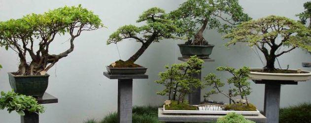 vasos-bonsai