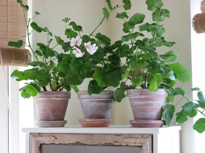 vasos c plantinhas