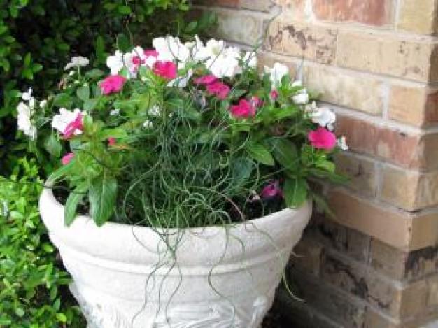 vaso-de-plantas