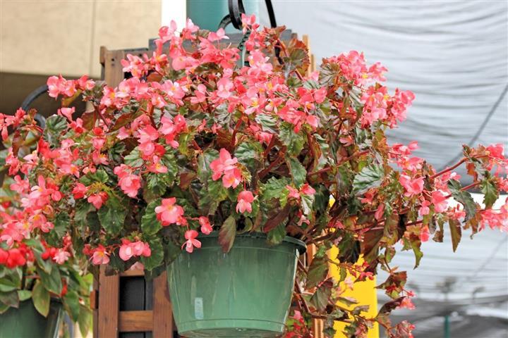 vasos flores plantadas (Small)