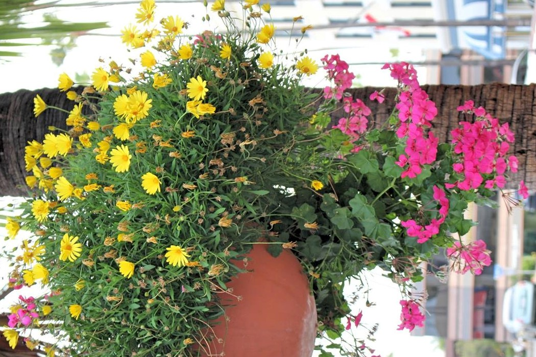 vasos flores