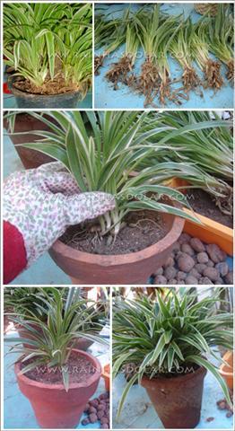 vasos plantados (Small)